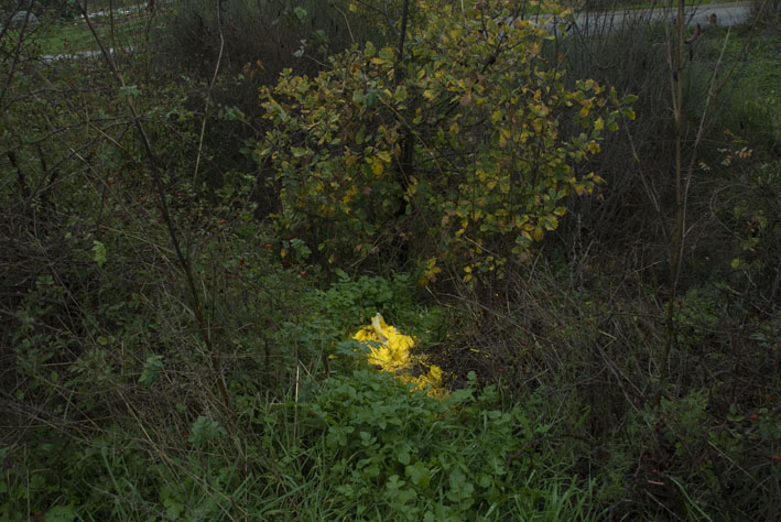 yellowplasticinbush