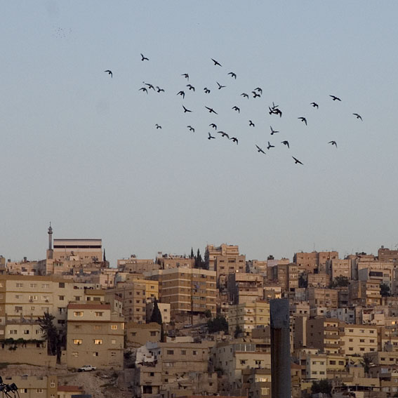 Birds flying over the city