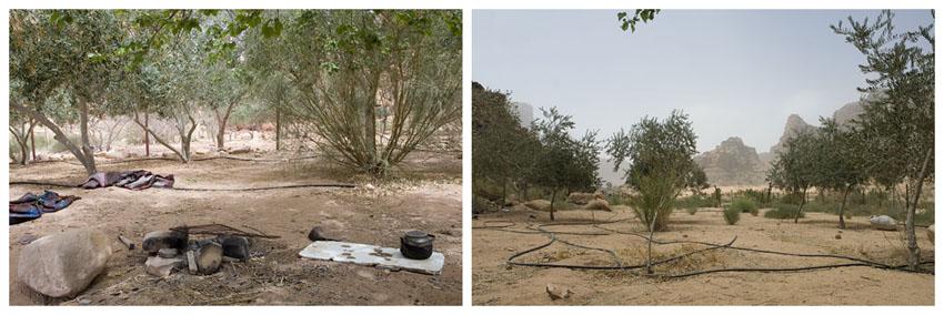 garden in the wadi