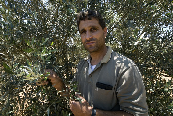 the farmer and his olives