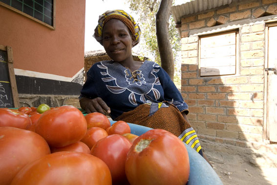 local farmers deliver tomatoes to Nkwichi Lodge, Niassa, Mozambique
