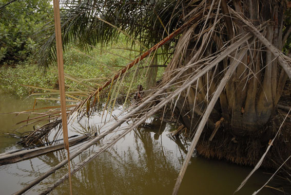 source of all water needs, Mtepwe River