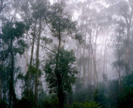 rainforest_nsw_01