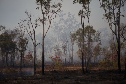Burning Off #2, NT, 2011